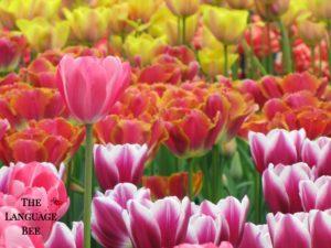 Language Bee Tulips Logo